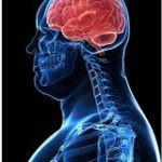 O Cérebro dos Obesos é diferente dos Magros